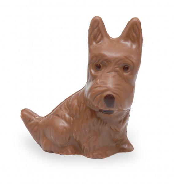 Schokoladen-Terrier
